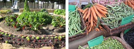 SFN victory garden and variety of market produce: carrots, green beans, purple green beans, green garbonzo beans
