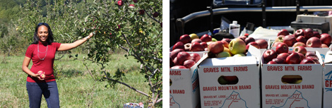 Image 1: Stayman apple tree in Syria, VA; Image 2: White cardboard boxes of just picked apples on the back of a truck