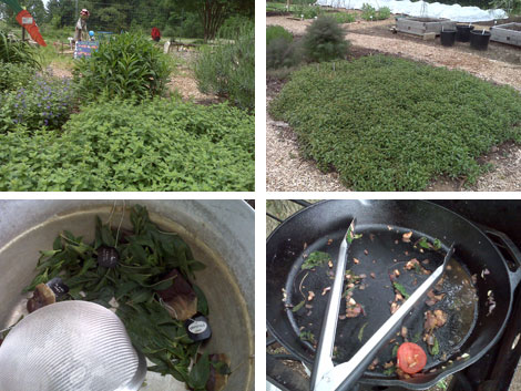 Washington Youth Garden; Drained mint leaves and Empty pan after sauteeing spinach